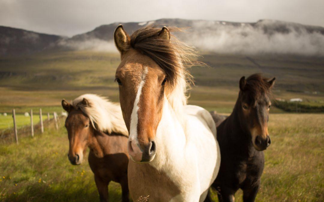 Das Leben ist kein Ponyhof! Wie machen wir Kinder wirklich stark für diese Welt?